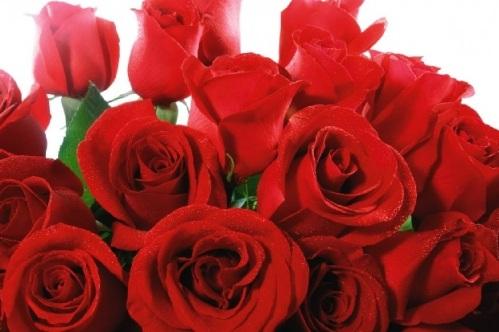 Ini_Manfaat_Bunga_Mawar_Merah_Untuk_Kesehatan_Kecantikan